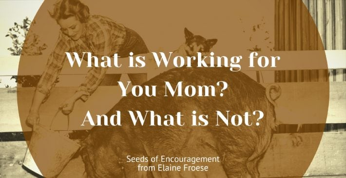 What is Working for You Mom? And What is Not?