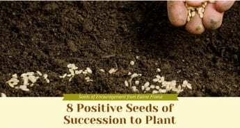 8 Positive Seeds of Succession to Plant