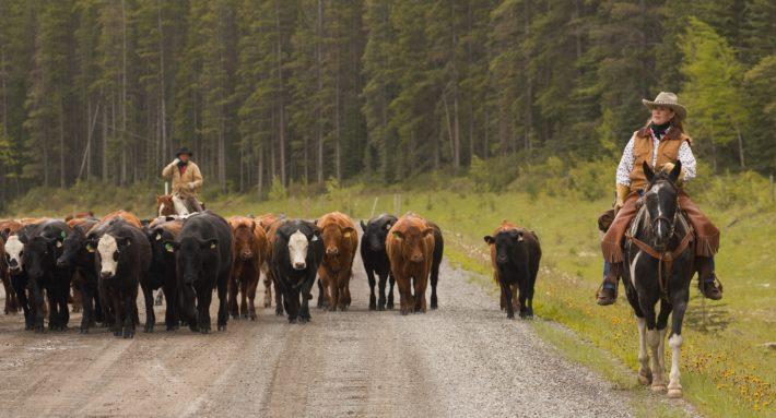 farm brothers undiscussabull image